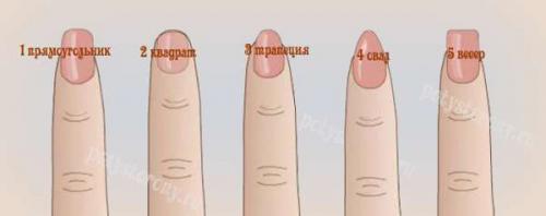 Цвет ногтей о чем говорит о женщине. Форма ногтей