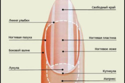 Сухая кожа вокруг ногтей причины. Почему кожа у ногтей перестает быть нежной