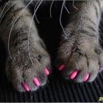 Девочки, смешно, конечно, но у меня прям крик души у меня дома 2 кошки.
