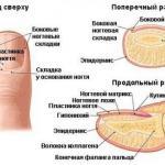 Что такое ноготь?